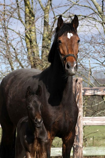 Loulou med Sundown ved sin side.