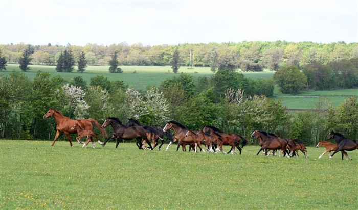 The mares and foals on a spring day.